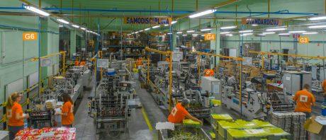 bosis-proizvodnja